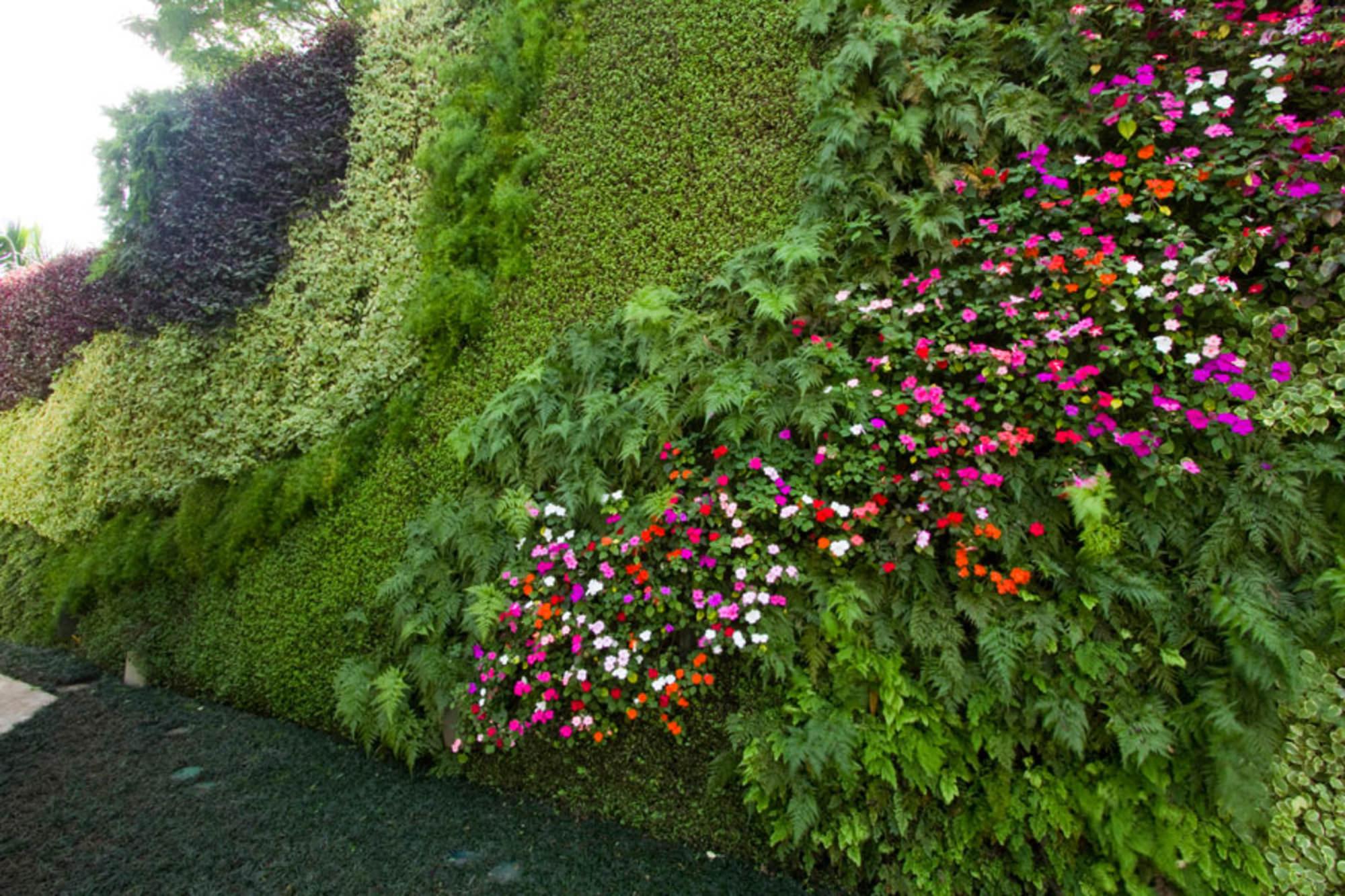 jardim vertical tipos de plantas:Veja como montar um jardim vertical em sua casa – Jacobucci