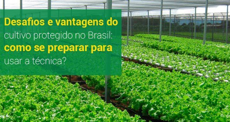Desafios e vantagens do cultivo protegido no Brasil: como se preparar para usar a técnica?