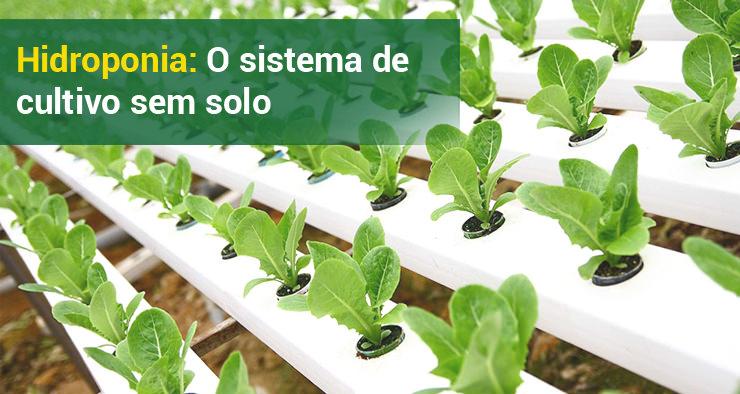 Hidroponia: o sistema de cultivo sem solo