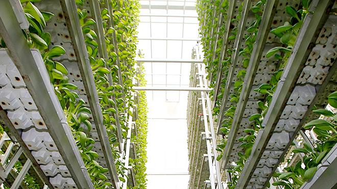 Fazendas verticais – A agricultura do futuro