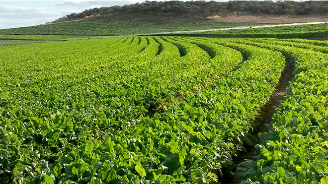 O impacto das mudanças climáticas na agricultura