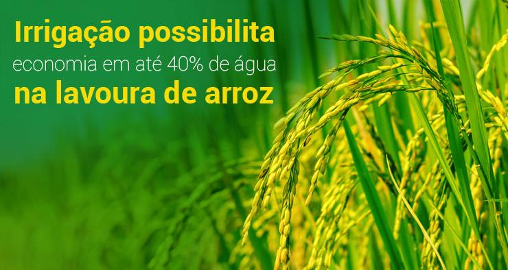 Economia em até 40% de água na lavoura de arroz
