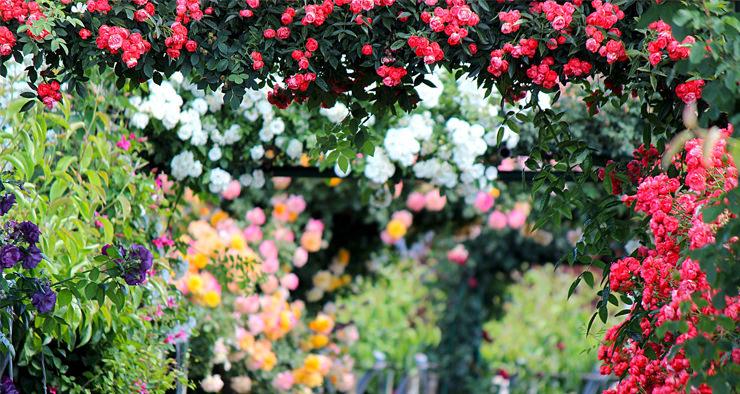 Irrigação correta no jardim pode garantir economia de água