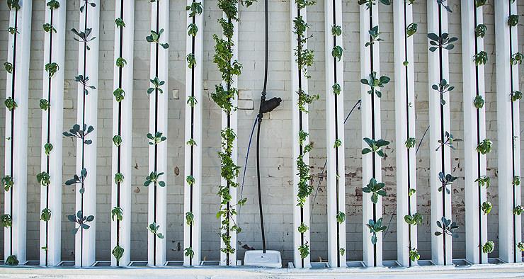 Como montar seu jardim vertical?