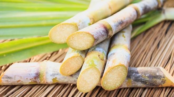 Irrigação em cana de açúcar proporciona aumento na produtividade