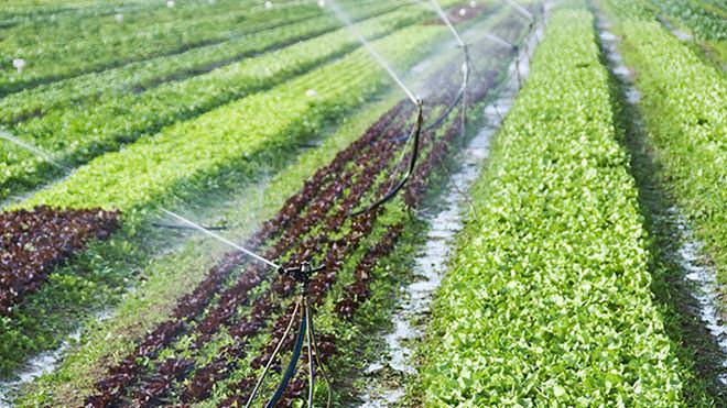 Quais são as diferenças entre irrigação e fertirrigação?