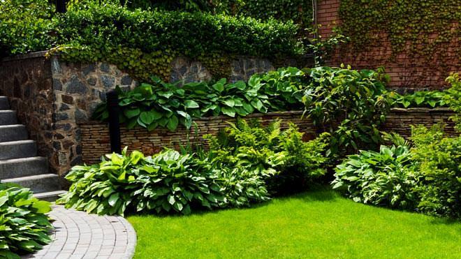 Irrigação de jardins: a importância da água da chuva