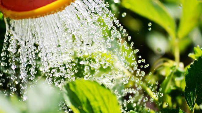 Como manter as plantas saudáveis durante a estação mais quente do ano?