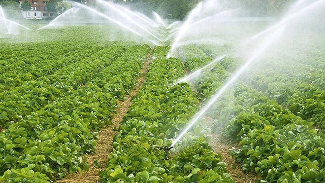 O que você deve avaliar na hora de comprar uma irrigação?