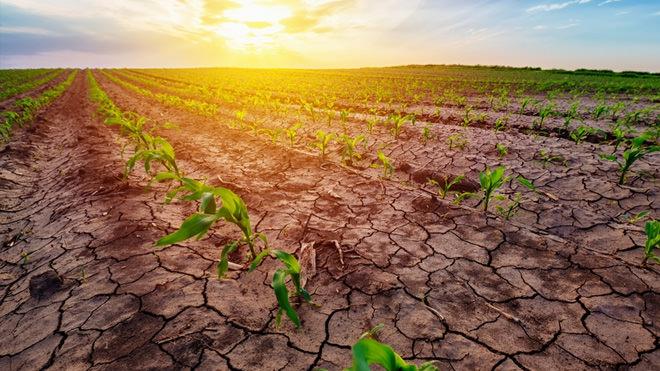 Desafios do agronegócio: como lidar com a falta de chuvas?