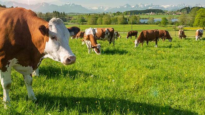 Irrigação de Pastagem: a melhor escolha para seu negócio