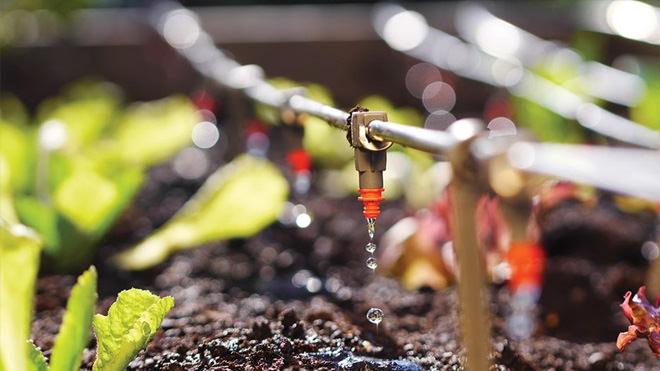 Irrigação: bons resultados dependem de ações integradas