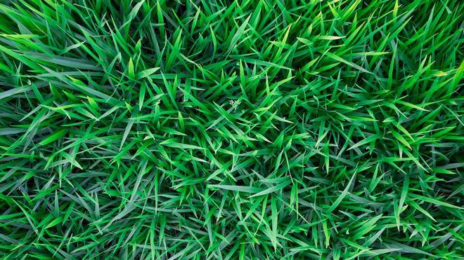 Irrigação de gramado: Como fazer a manutenção do seu gramado